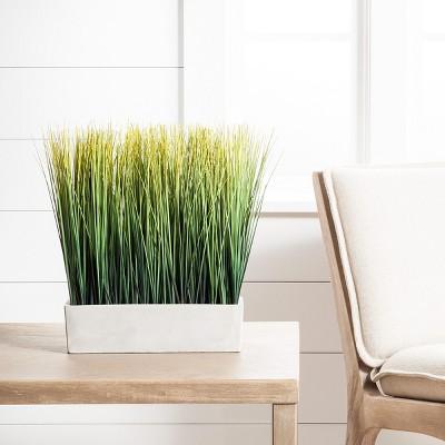 Delightful Indoor Plants