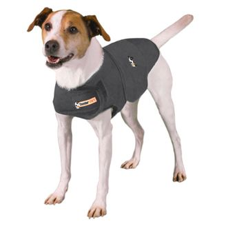 Dog Clothing & Accessories, Supplies, Pets : Target