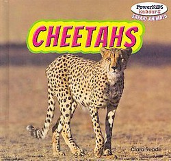 Cheetahs (Library) (Clara Reade)