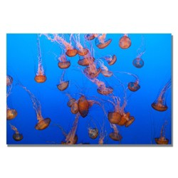 'Color Jellyfish' by Ariane Moshayedi Ready to Hang Canvas Wall Art