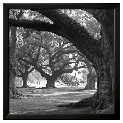 Art.com Oak Alley, West Row by William Guion - Framed Art Print