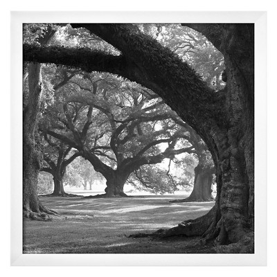 Art.com Oak Alley, West Row by William Guion - Framed Art Print