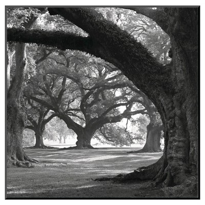 Art.com Oak Alley, West Row by William Guion - Mounted Print