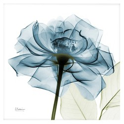 Art.com -Blue Rose