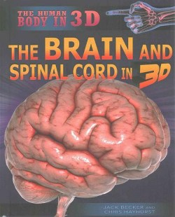 Brain and Spinal Cord in 3D (Library) (Jack Becker & Chris Hayhurst)