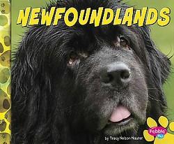 Newfoundlands (Library) (Allan Morey)