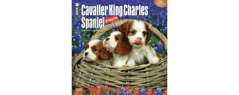 Cavalier King Charles Spaniel Puppies 2016 Calendar (Paperback)