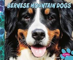 Bernese Mountain Dogs (Library) (Allan Morey)