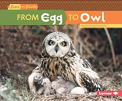 From Egg to Owl (Library) (Jennifer Boothroyd)