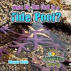 What Do You Find in a Tide Pool? (Library) (Megan Kopp)
