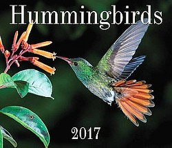Hummingbirds 2017 Calendar (Paperback)