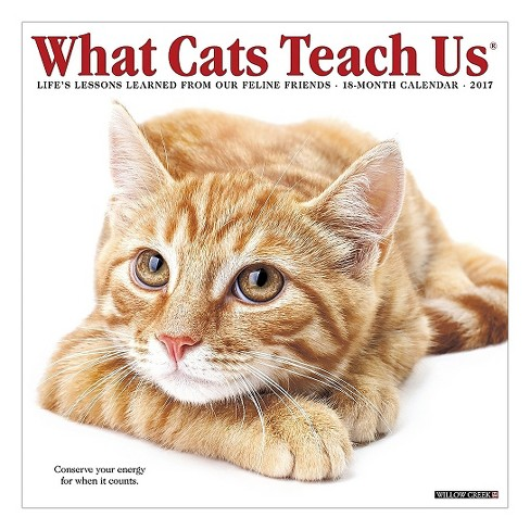 What Cats Teach Us 2017 Calendar : Life's Lessons Learned from Our Feline Friends (Paperback) - image 1 of 2