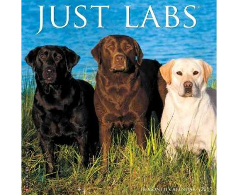 Just Labs 2017 Calendar (Paperback) - image 1 of 1