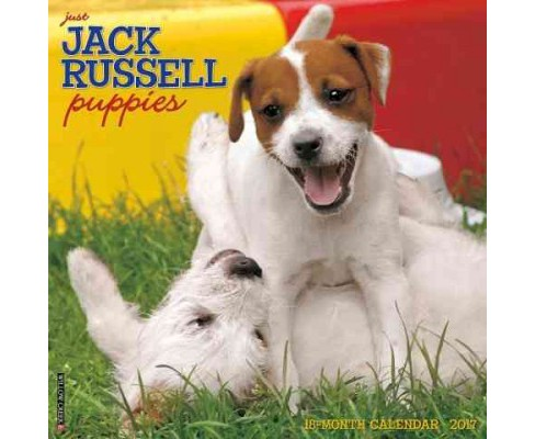 Just Jack Russell Puppies 2017 Calendar (Paperback) - image 1 of 1