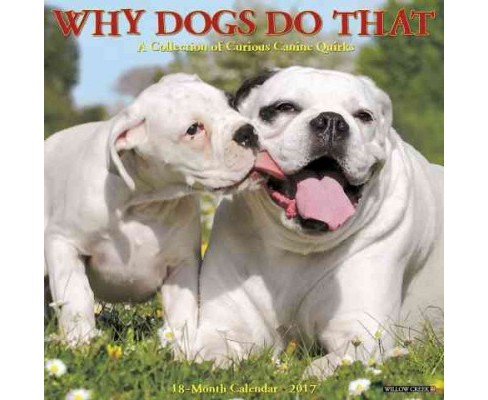 Why Dogs Do That 2017 Calendar : A Collection of Curious Canine Quirks (Paperback) - image 1 of 1