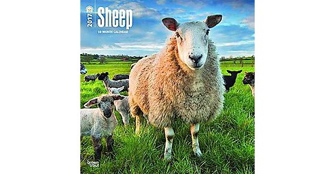 Sheep 2017 Calendar (Paperback) - image 1 of 1