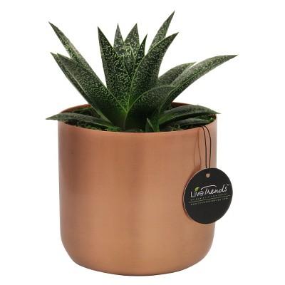 LiveTrends Copper Elegance Succulent