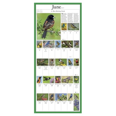 Audubon Songbirds & Other Backyard Birds 2017 Calendar (Paperback)