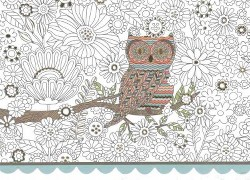Owl Boxed Note Cards (Stationery)
