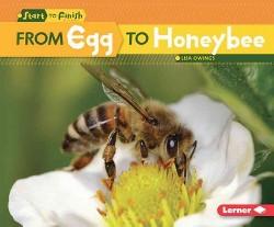 From Egg to Honeybee (Library) (Lisa Owings)