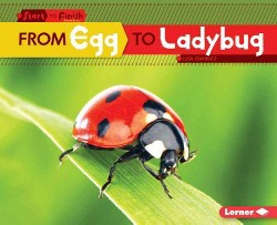 From Egg to Ladybug (Library) (Lisa Owings)