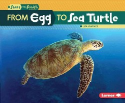 From Egg to Sea Turtle (Library) (Lisa Owings)