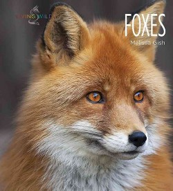 Foxes (Library) (Melissa Gish)