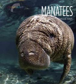 Manatees (Library) (Melissa Gish)