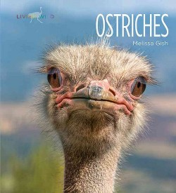 Ostriches (Library) (Melissa Gish)