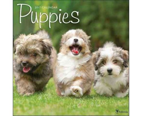 Puppies 2017 Calendar (Paperback) - image 1 of 1