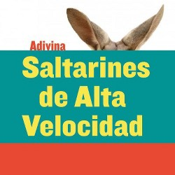 Saltarines de alta velocidad / High-Speed Hoppers : Canguro / Kangaroo (Library) (Kelly Calhoun)