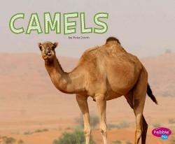 Camels (Library) (Rose Davin)