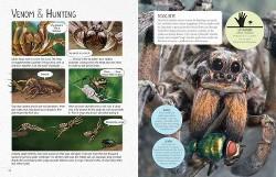 Deadly Spiders (Library) (Matt Turner)