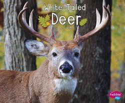 White-Tailed Deer (Library) (G. G. Lake)