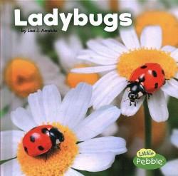 Ladybugs (Library) (Lisa J. Amstutz)