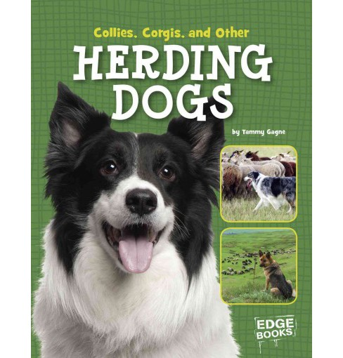 Collies, Corgies, and Other Herding Dogs (Library) (Tammy Gagne) - image 1 of 1