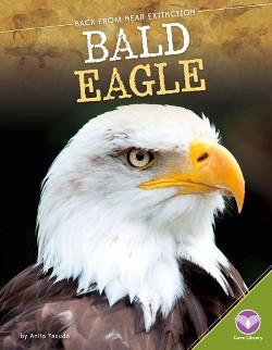 Bald Eagle (Library) (Anita Yasuda)