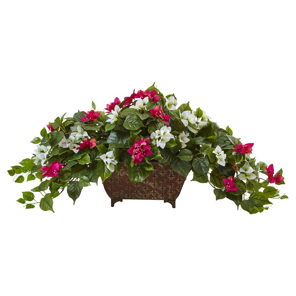 The best cyber monday deals on bougainvillea for 2016 for Natural multi colored roses