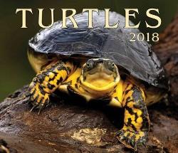 Turtles 2018 Calendar (Paperback)