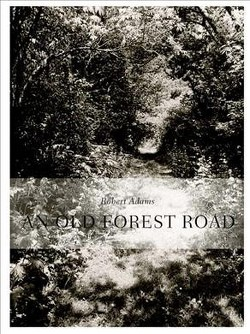 Robert Adams : An Old Forest Road (Hardcover) (Robert Adams & Henry David Thoreau & W. S. Merwin)