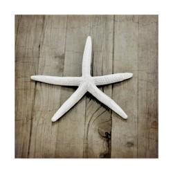 "Lightbox journal Gypsy Sea White Star Unframed Wall 35""x35"" - Trademark Fine Art"