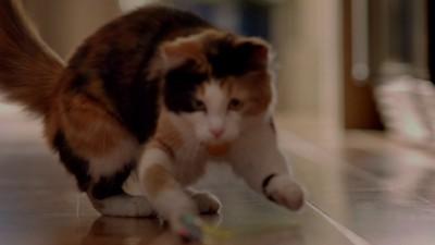 Purina ONE Urinary Tract Health Formula Adult Premium Dry Cat Food