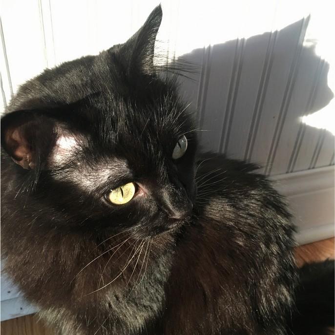 Pic of a cat named Stella