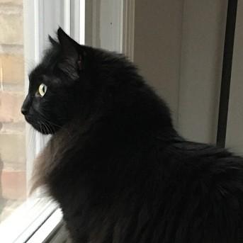 Pic of Stella