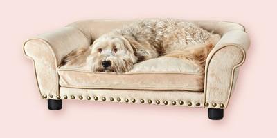 Enchanted Home Dreamcatcher Pet Bed - Gold