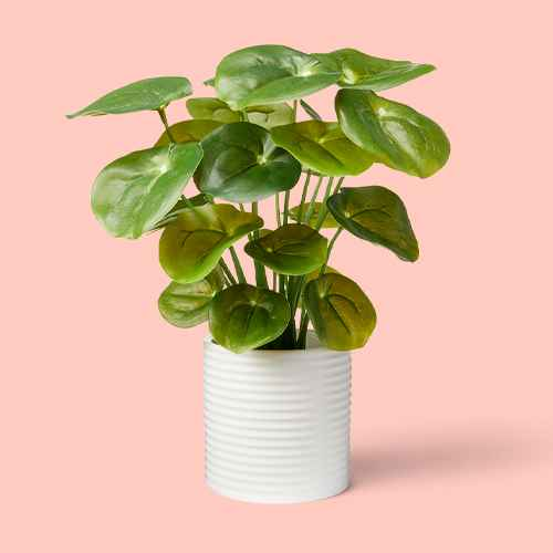 """11.5""""  x 6"""" Artificial Pilea Plant in Ribbed Ceramic Pot White -  Hilton Carter for Target"""