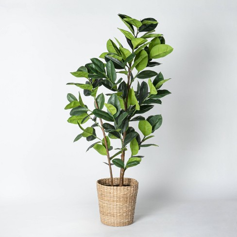 Artificial Rubber Leaf Tree in Pot Green - Threshold™ designed with Studio McGee - image 1 of 4