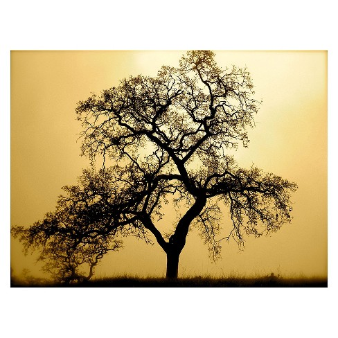 'Pacific Oak' by Colleen ProppeReady to Hang Canvas Wall Art - image 1 of 1