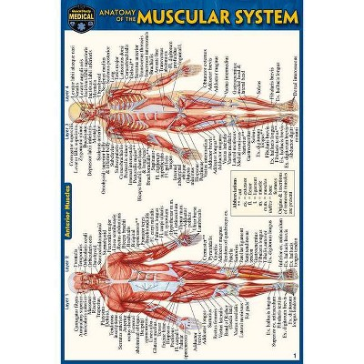 Anatomy of the Muscular System (Pocket-Sized Edition - 4x6 Inches) - 2nd Edition by  Vincent Perez (Poster)