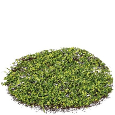 "Sullivans Round Moss Pad Decorative Filler 1.5""H Green"